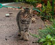 Особенный котик все ждёт! Где же ты, добрый друг-человек? Киев