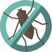 Профессиональное уничтожение насекомых, грызунов, грибка. Петрозаводск