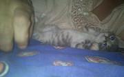 отдам котят донецк днр Донецк