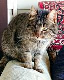 Дайте шанс для котика без шансов накануне великого Праздника Киев