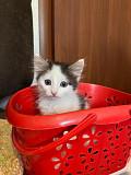 Котята в добрые руки Ульяновск