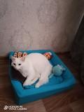 Отдам кота Ульяновск