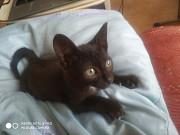 Котенок в добрые руки Тюмень
