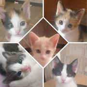 Зеленоглазые котята - добрым людям Мариуполь