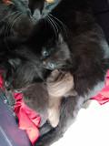 Котят в добрые руки. Новосибирск