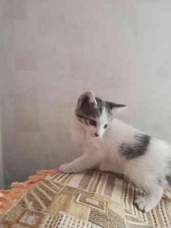 Кошки в поиске Дома Симферополь