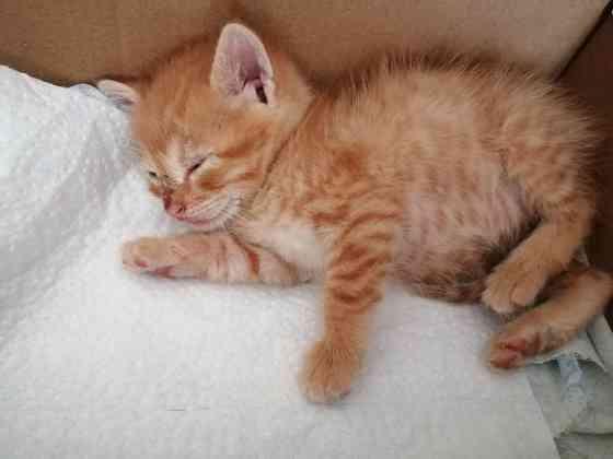 Рыжий котенок ищет себе дом Минск