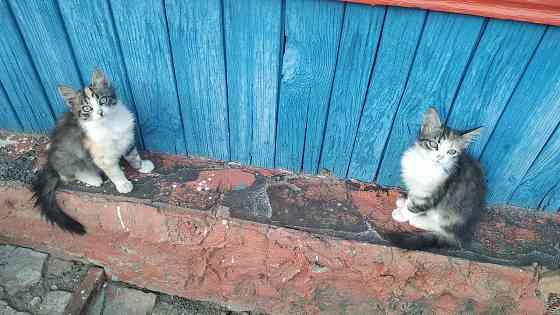 Котята в добрые руки Жлобин