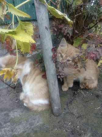 7 котят в дар Пинск