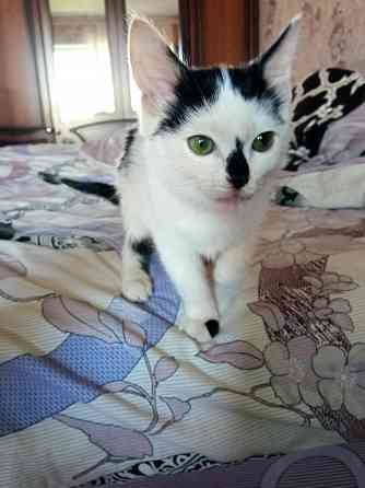 Котёнок (кошечка) в дар Могилёв