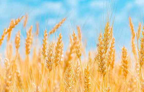 Земля сельскохозяйственного назначения 1350 га. Пашня Оренбург
