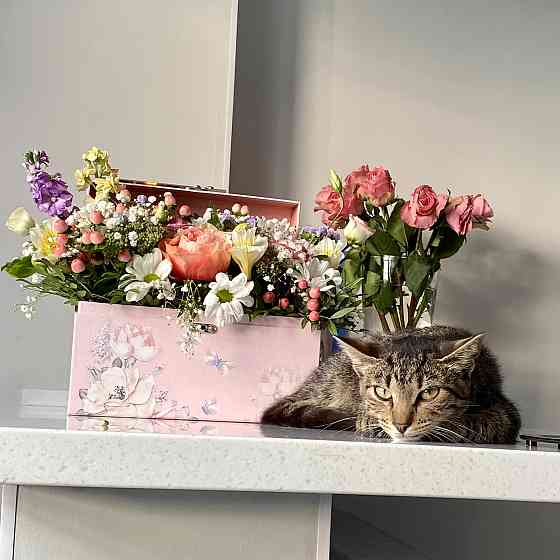 Котёнок Санкт-Петербург