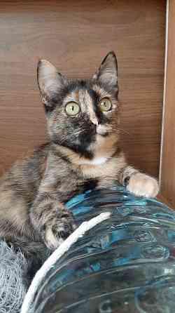 Котёнок, Клёпа Брест