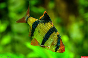 Продам аквариумных рыбок Симферополь