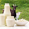 Козьи молочные продукты и парное молоко