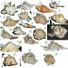 Коллекция ракушек