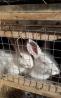 Кролики 2 месяца .