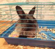 Кролик Стерлитамак