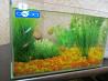Продам аквариум с рыбками и улитками в комплекте.