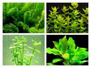 Аквариумные растения и теодоксусы Рязань