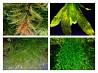 Аквариумные растения и теодоксусы