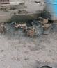 Утки Кряква