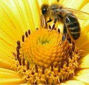 Продам пчел Ульяновск