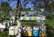 Пчела.пчелопакеты. семьи. Матки Калуга