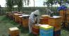 Продам пасеку с пчелами