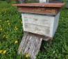 Продам семьи пчел