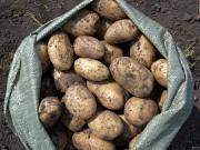 продам картошку семенную Усолье-Сибирское