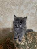 отдам даром котят Луганск