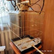 Продам клетку с игровым стендом для попугая Феодосия