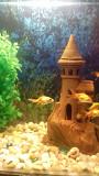 Продам гуппи,тернеций,золотых рыбок Армавир