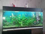 аквариум Бендеры
