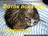 Отдадим мелких котов
