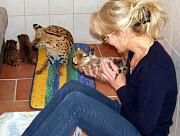 Продам котят Сервала Киев