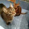 Кот Сенька ищет семью