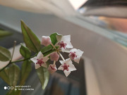 Комнатные цветы Санкт-Петербург