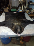 Шкура медведя Тюмень