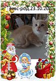 котята као мани Мариуполь