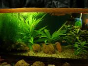 Продаю аквариумные растения Минск