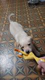 Отдам милого щенка в добрые руки) Луганск